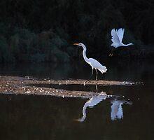 Egrets Ballet by Tam Ryan