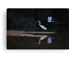 Egrets Ballet Canvas Print