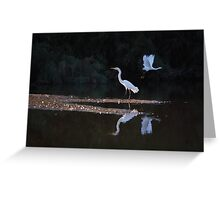 Egrets Ballet Greeting Card