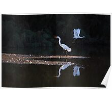 Egrets Ballet Poster