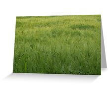 The Wind in the Barley Greeting Card