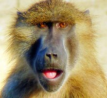Guinea Baboon Portrait by HJIrvine