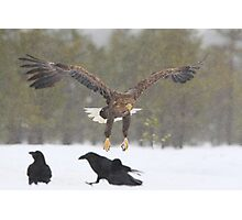 Approaching White-tailed Eagle Photographic Print