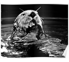 Sea Otter Eating Poster