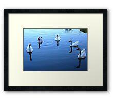 Geese Gathering Framed Print