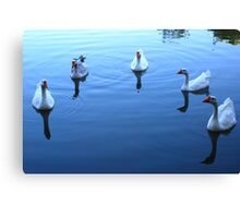 Geese Gathering Canvas Print