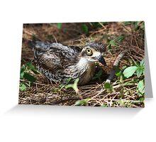 Urban Nesting Greeting Card