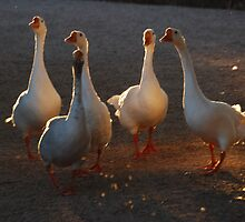 Geese by Tam Ryan