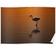 Egret at Sunset Poster