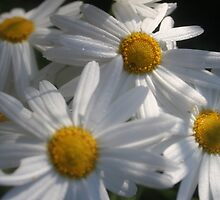 """""""Daisy Chain"""" by lynnehayes"""