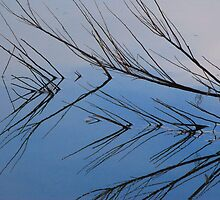 Branch Reflection by Tam Ryan