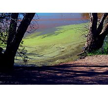 Algae Photographic Print