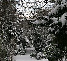 A Snowy Wonderland  by Alison Ward