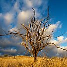 Dead tree in a field at sunset by Flux Photography
