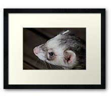 Ferret Profile Framed Print