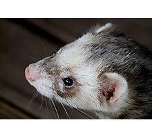 Ferret Profile Photographic Print