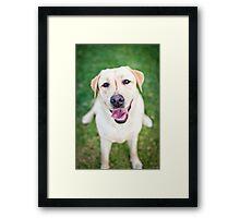 Inara the Labrador Retriever Framed Print
