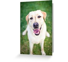 Inara the Labrador Retriever Greeting Card