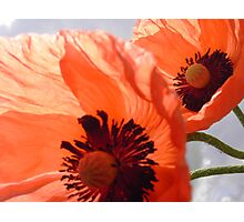 Poppy's all over the world Photographic Print
