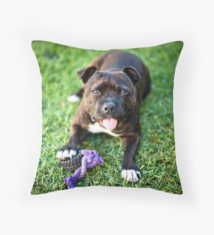 Molly the Staffordshire Bull Terrier Throw Pillow