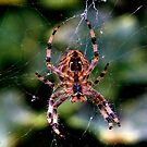 Damage Limitation (Arachnophobic?) by Bob Culshaw