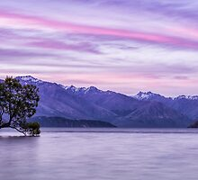 The Sun Sets Over That Wanaka Tree by Kristin Repsher