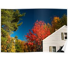 Red tree, white house, blue sky Poster
