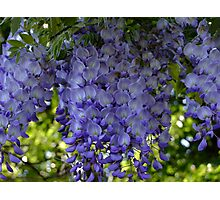 Whispy Wisteria! Photographic Print
