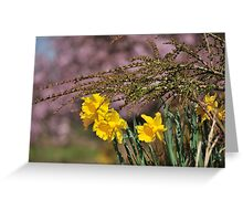 Daffodils in Galgate Greeting Card