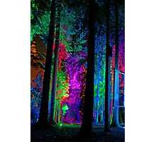 Electric Forest 1 Photographic Print