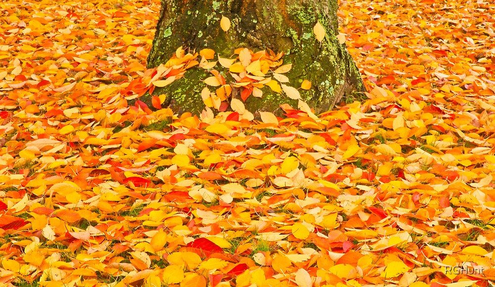 FALL LEAVES by RGHunt
