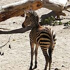 Zebra Time Out by Loree McComb