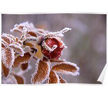 Winter jewel Poster