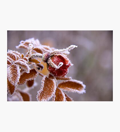 Winter jewel Photographic Print