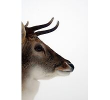 Winter Stag 3 Photographic Print