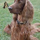 Phantom & the Butterfly II by Ann J. Sagel