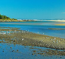 Sawtell Estuary by Penny Smith