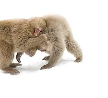Tussle by Anne Young