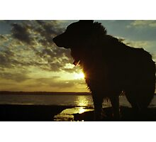 Indy at Sunset Photographic Print