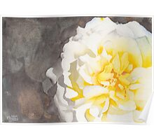 Point Defiance White Flower Poster