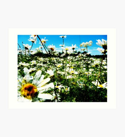 Daisy's Field Art Print