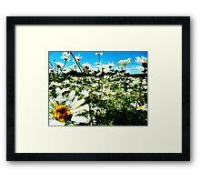 Daisy's Field Framed Print