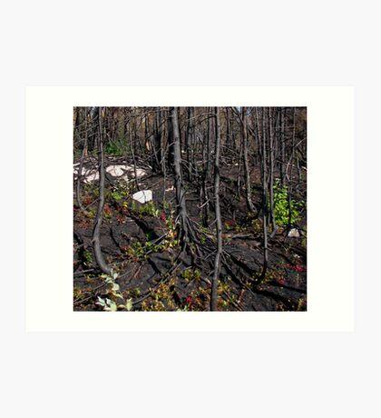 Burn Zone at Jackfish Ontario Canada on Lake Superior Art Print