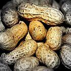 Nuts by Alan Reid