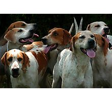 Foxhounds Photographic Print