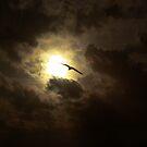 Seagull over Hove Beach by mr-scruffles