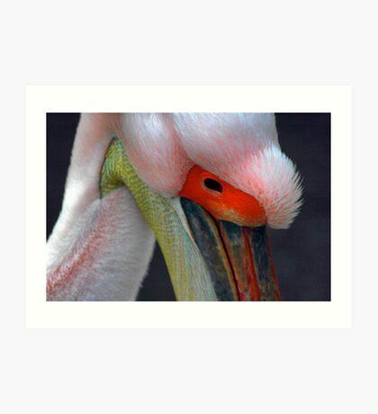 Pelican 2 Art Print