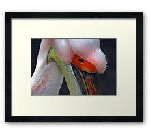 Pelican 2 Framed Print