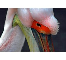 Pelican 2 Photographic Print