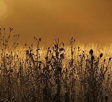 misty dawn in sleeping deer meadow by borzoi1